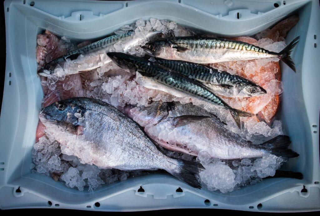 Frischer Fisch auf Eis