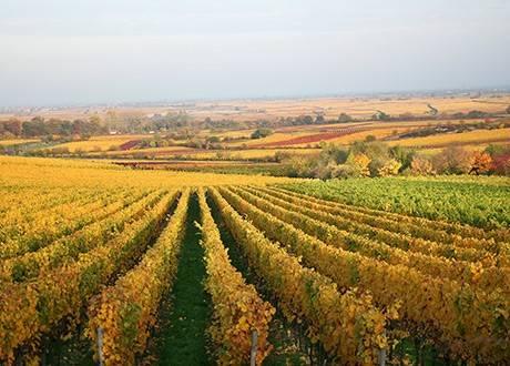 Rebenglut Räucherchips aus Bio-Weinreben